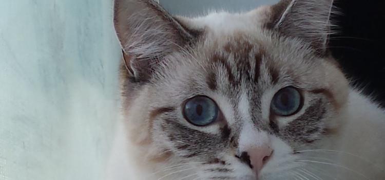 Toxoplasmosis, Kitty Litter & You