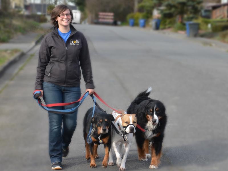 Dog Walking Jobs Kent Area