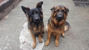 Bucker & Loki